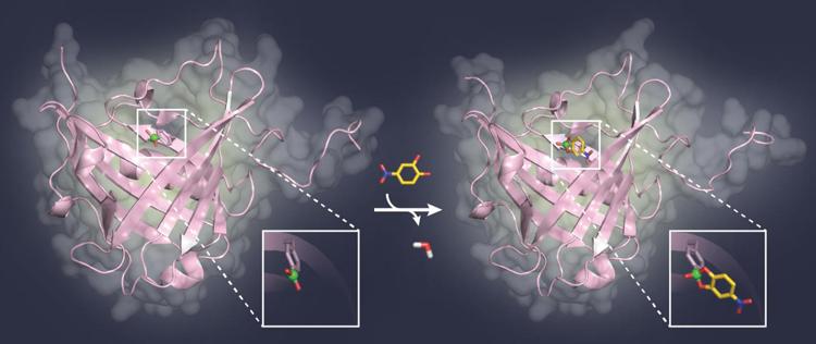 Artificial Sugar-Binding Protein