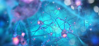 Pharmacological chaperone therapy shown to prevent Alzheimer's in mice