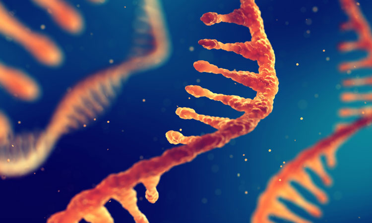RNA circuits making gene therapy more effective