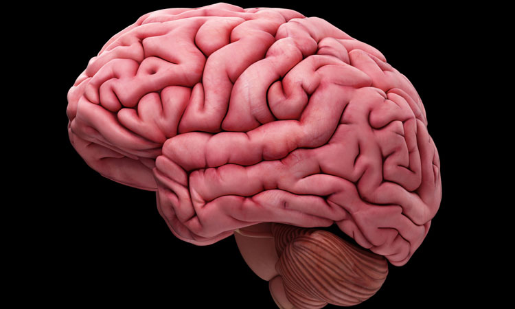 3D rendering of a brain
