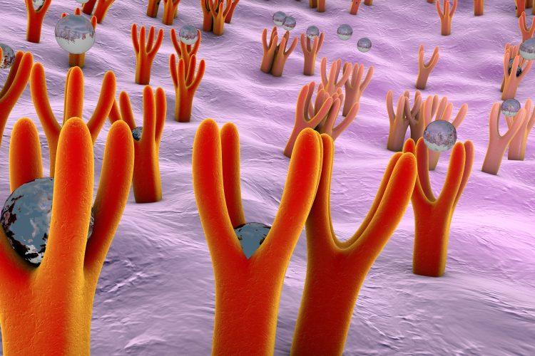cartoon image of cell surface receptors binding small molecules