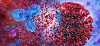 coronavirus being destroyed by antibody