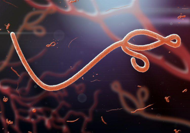 Ebola virus 3D rendering