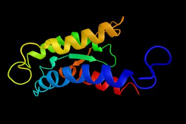 structural image of an interleukin 2 protein formed of alpha helices