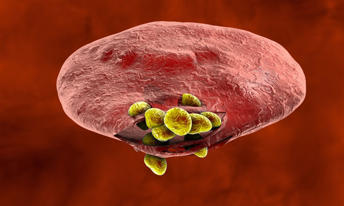malaria-parasite-red-blood-cell