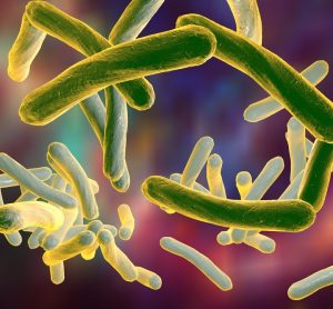 tuberculosis bacteria - long thin gerkin-like structures