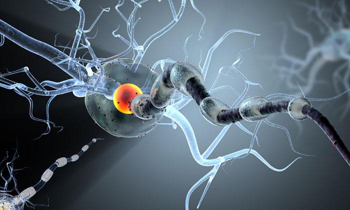 neural-stem-cells