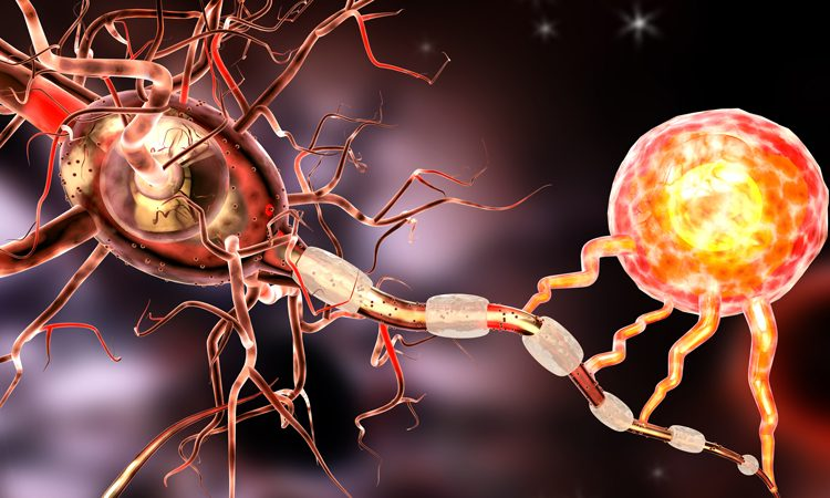 Compound promotes healing of myelin in nervous system disorders