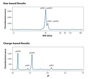 FIGURE 2. The same HeLa lysate sample, stimulated with epidermal growth factor, was analyzed and probed with an anti-phospho specific ERK antibody in both size-based and charge-based assays.