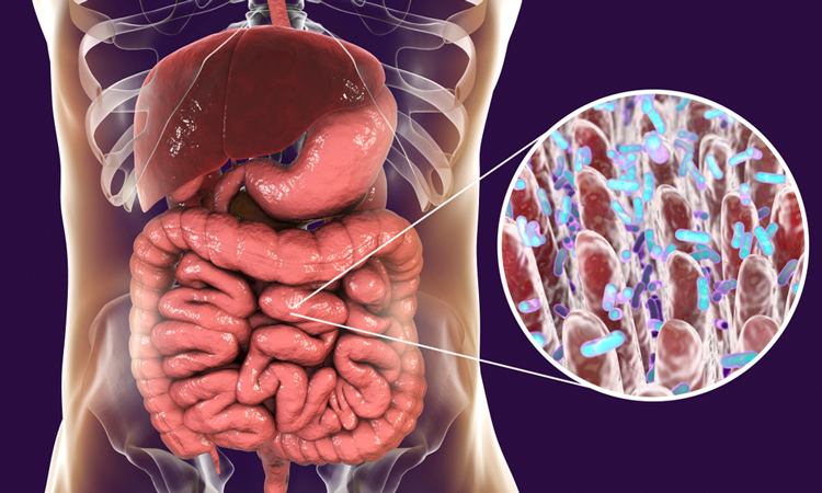 Gut with microbiome closeup