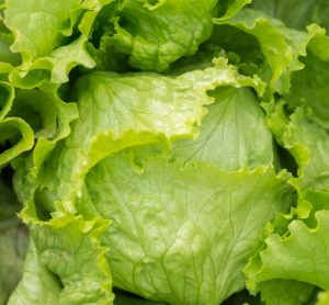 Lettuce leaves