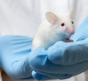 Mouse in gloved hands