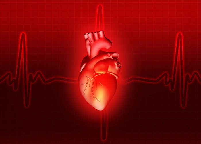 heart muscle patches improve heart attack recovery Heart Attack Treatment large human cardiac muscle patches created in the lab have been tested for the first time on large animals in a heart attack model