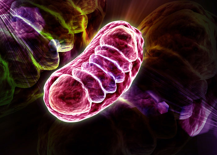 preventing serious mitochondria disease Mitochondria are the energy source in almost every body cell inside the body, it's much more serious and complex: mitochondrial disease may.