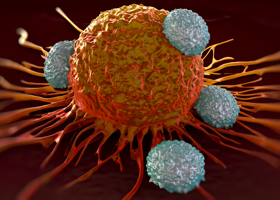 T-cells