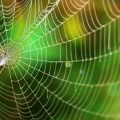 Making biological drugs with spider silk protein