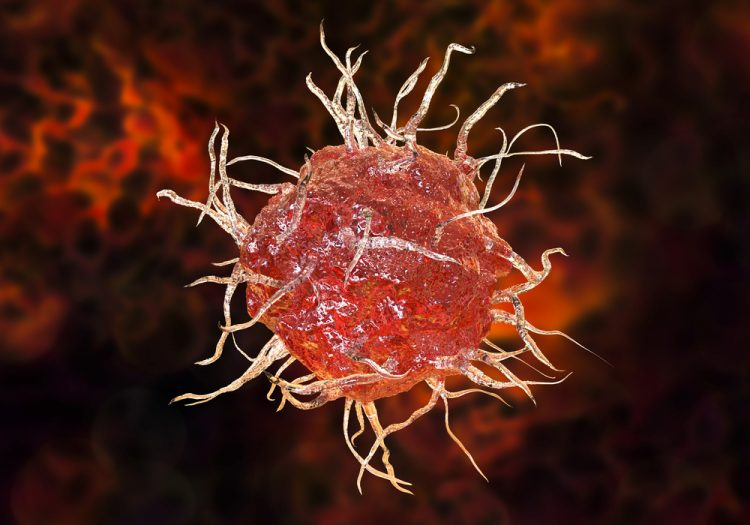 Red dendritic cell