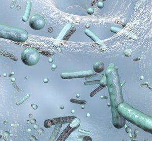 Bacteria on biofilm