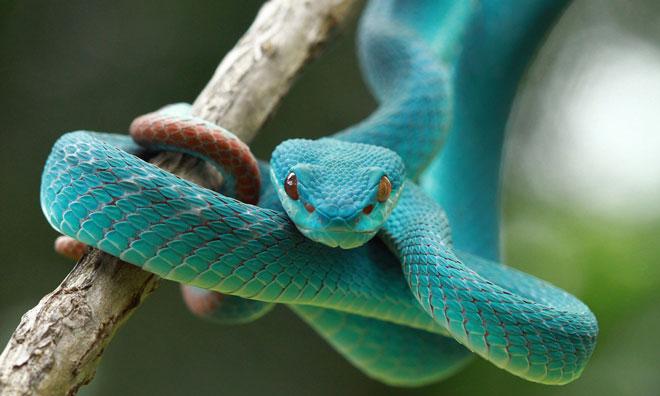 نتیجه تصویری برای snake venom