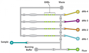 FIGURE 2. Ella splits each sample across 4 parallel, isolated microfluidic channels. Each channel has a single-plex immunoassay for a specific analyte, so there's no cross-reactivity.
