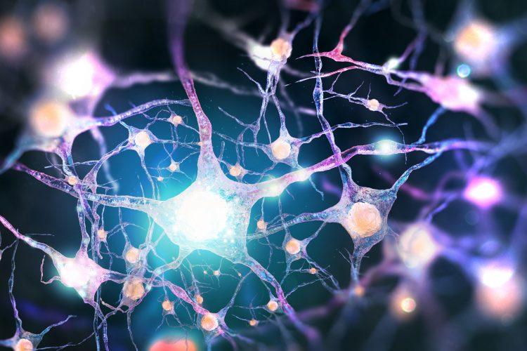 synapse illustration