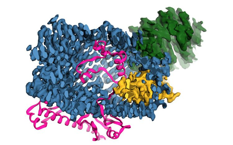 Human protein important for cellular communication resembles bacterial toxin