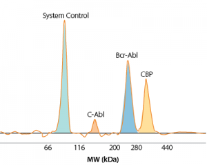 Simple Western 90 kDa System Control and endogenous C-Abl, BCR-Abl, and CBP in K562 cells detected simultaneously by Wes.