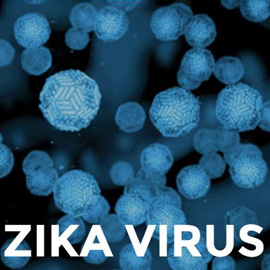 Zika virus cells